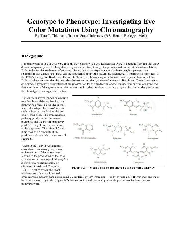 Genotype to Phenotype: Investigating Eye Color Mutations Using Chromatography By Tara C. Thiemann, Truman State University...