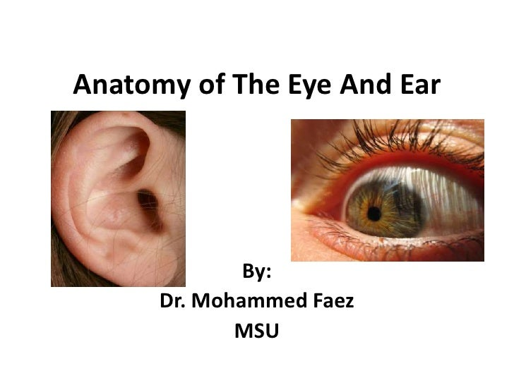Anatomy of The Eye And Ear<br />By:<br />Dr. Mohammed Faez<br />MSU<br />
