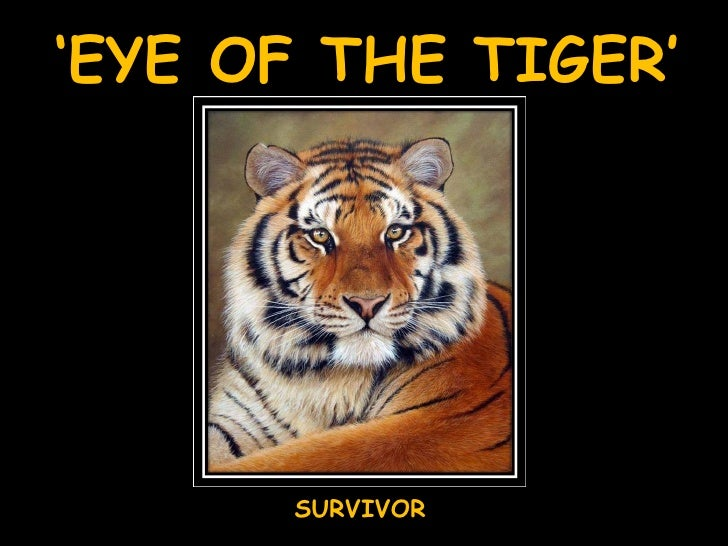 'Eye Of The Tiger'