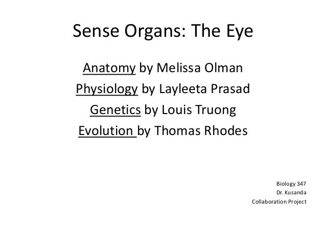Sense Organs: The Eye Anatomy by Melissa OlmanPhysiology by Layleeta Prasad  Genetics by Louis TruongEvolution by Thomas R...