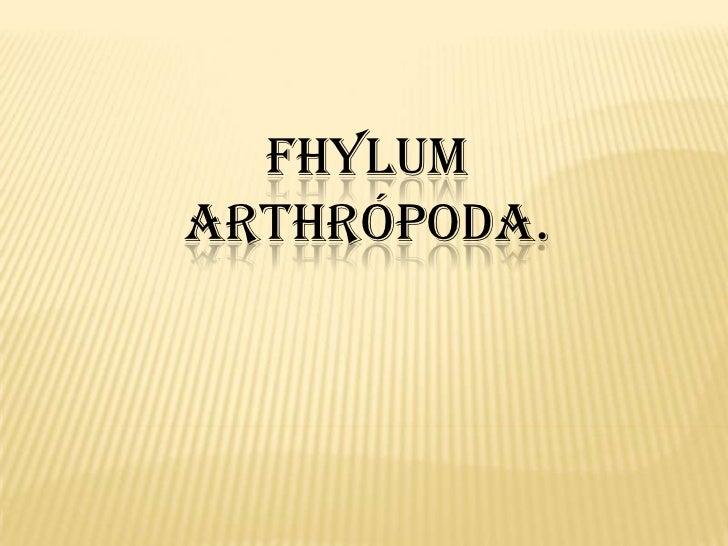 FHYLUMARTHRÓPODA.
