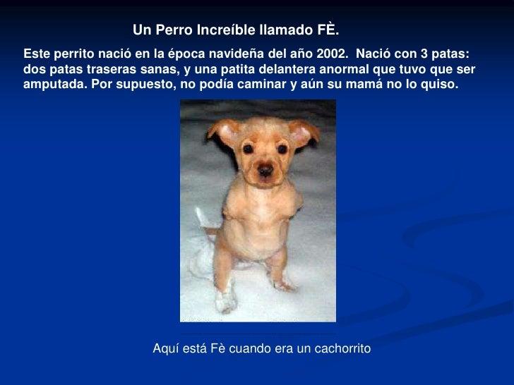 Un Perro Increíble llamado FÈ.<br />Este perrito nació en la época navideñadel año 2002. Nació con 3 patas: dos patas tr...