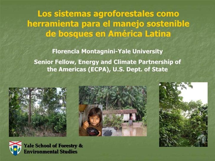 Sistemas Agroforestales como Herramienta de Manejo Sostenible