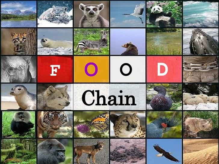 F O O D Chain