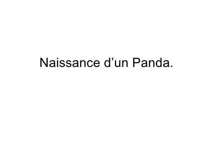 Naissance d'un Panda.