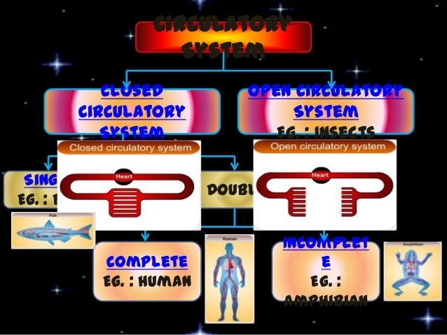 closed source systems essay 2018-7-18 open source software versus closed source software essay  open system vs closed system closed systems such as.