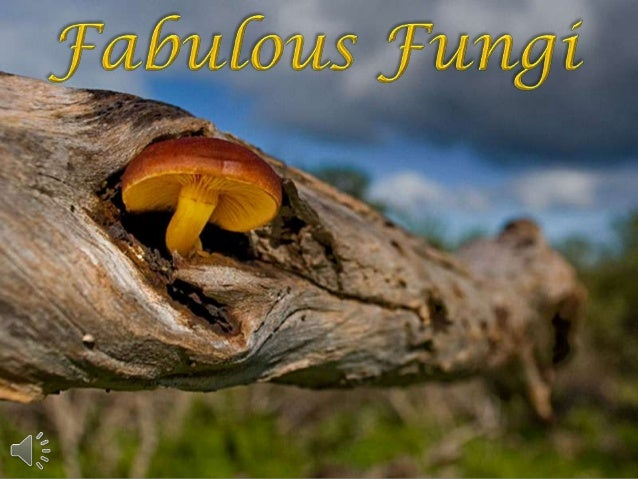 Fabulous fungi (v.m.)