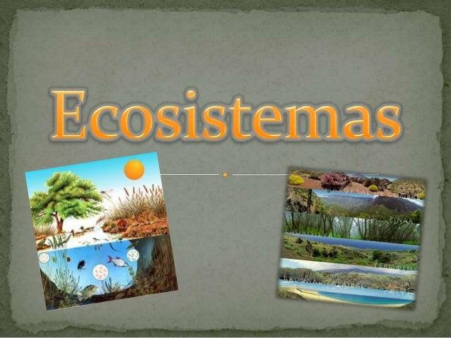  Un ecosistema es una unidad compuesta de organismos interdependientes que comparten el mismo hábitat. Los ecosistemas su...