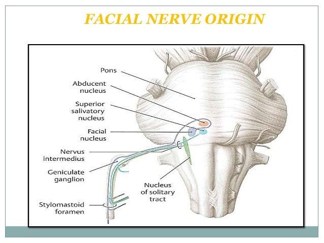 facial nerve pass