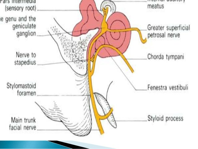 Arterial System Systema Arteriarum likewise Pons 5369743 further Processes On Animal Development further 2942256 likewise Eponymous Fractures. on dorsal cavity