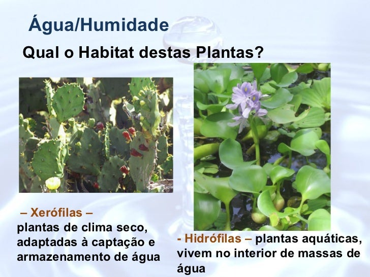 Factores abi ticos - Jacinto planta interior ...