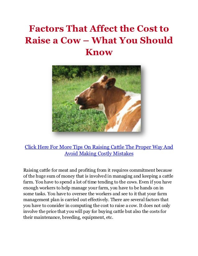 Factors That Affect the Cost toRaise a Cow – What You Should            KnowClick Here For More Tips On Raising Cattle The...