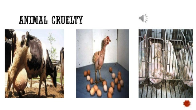 Resources on Factory Farming?