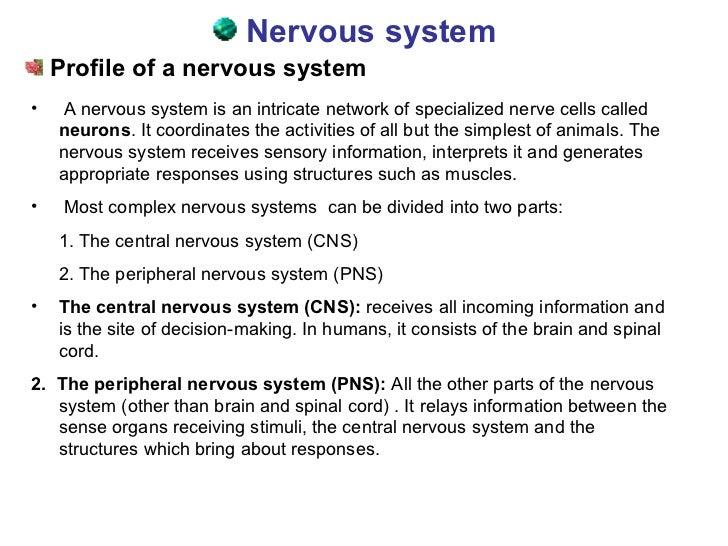 <ul><li>Nervous system </li></ul><ul><li>Profile of a nervous system </li></ul><ul><li>A nervous system is an intricate ne...