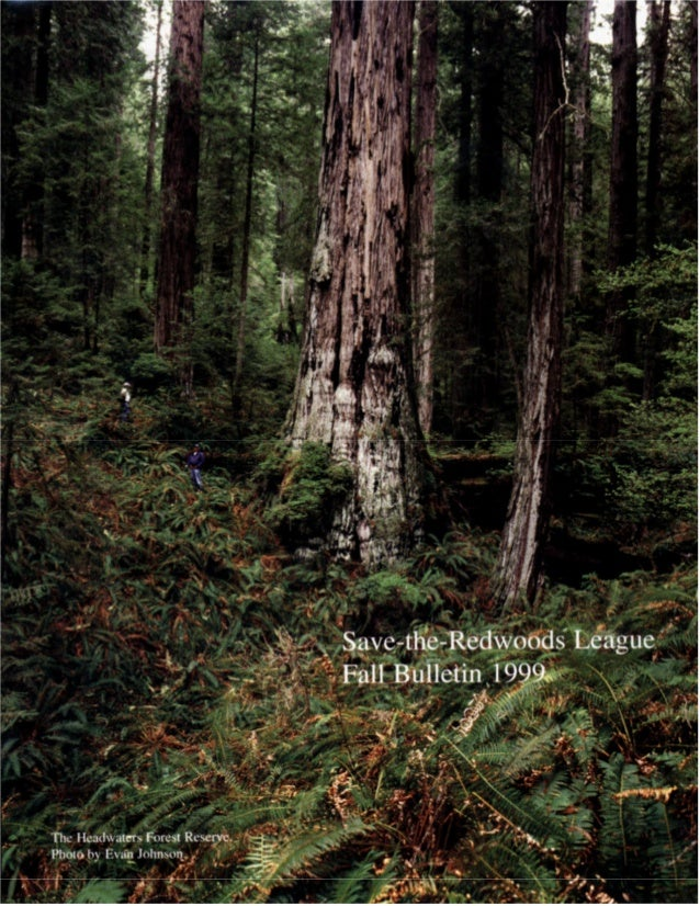 Fall bulletin 1999 ~ save the redwoods league
