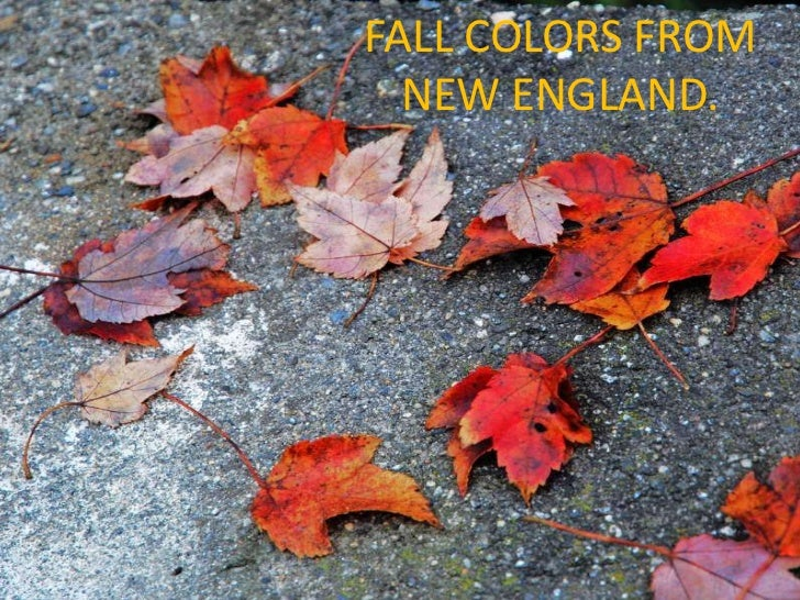 FALL COLORS FROM      NEW ENGLAND..