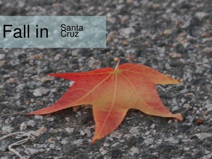Fall in<br />Santa Cruz<br />