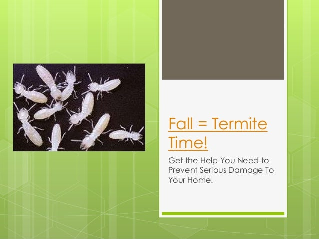 Fall = Termite Time! Get the Help You Need to Prevent Serious Damage To Your Home.