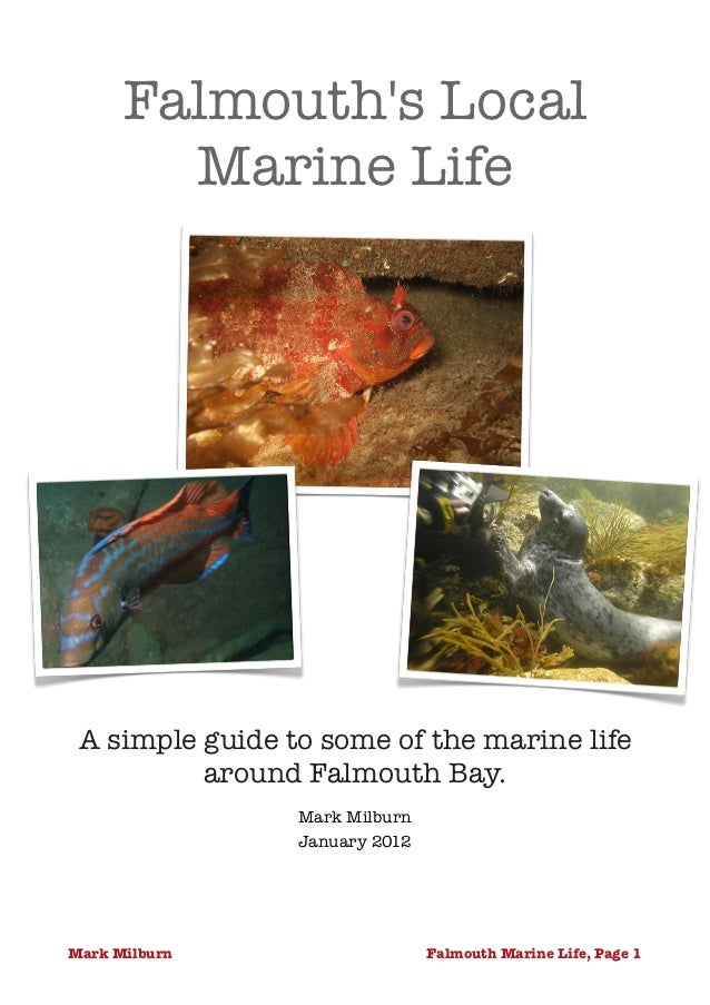 Falmouths Local        Marine Life A simple guide to some of the marine life          around Falmouth Bay.                ...