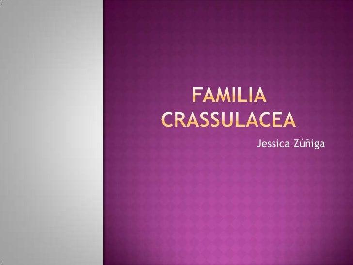 Familia crassulacea<br />Jessica Zúñiga<br />