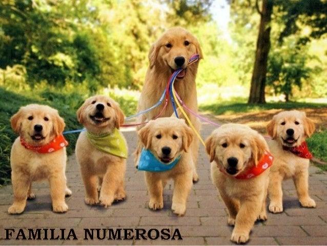 Familia numerosa/ large family