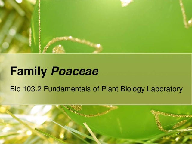 Family Poaceae Bio 103.2 Fundamentals of Plant Biology Laboratory