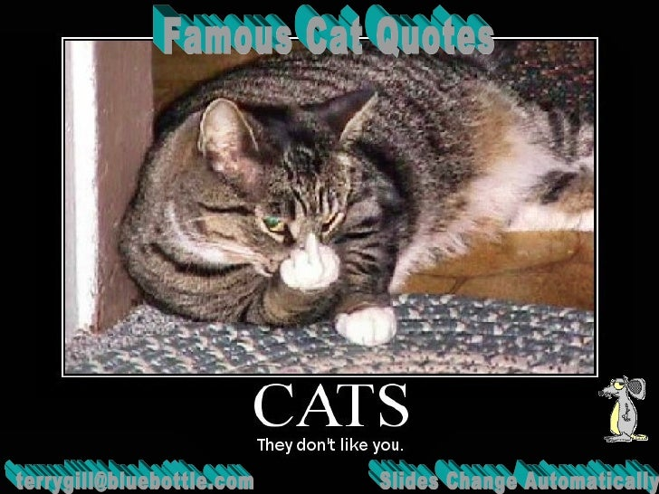 Famous Cat Quotes [email_address] Slides Change Automatically
