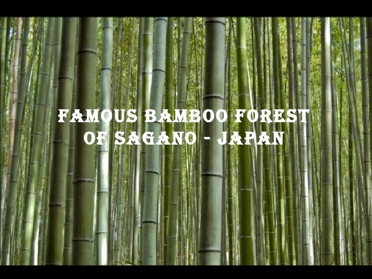 Famous BamBoo Forest oF sagano - JapanFamous BamBoo Forest  oF sagano - Japan