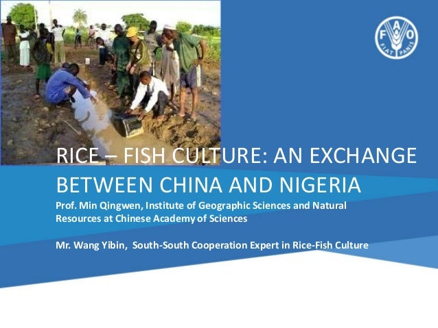RICE – FISH CULTURE: AN EXCHANGE BETWEEN CHINA AND NIGERIA Prof. Min Qingwen, Institute of Geographic Sciences and Natural...
