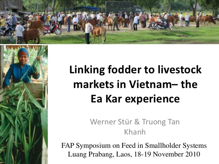 Linking fodder to livestock markets in Vietnam – the Ea Kar experience