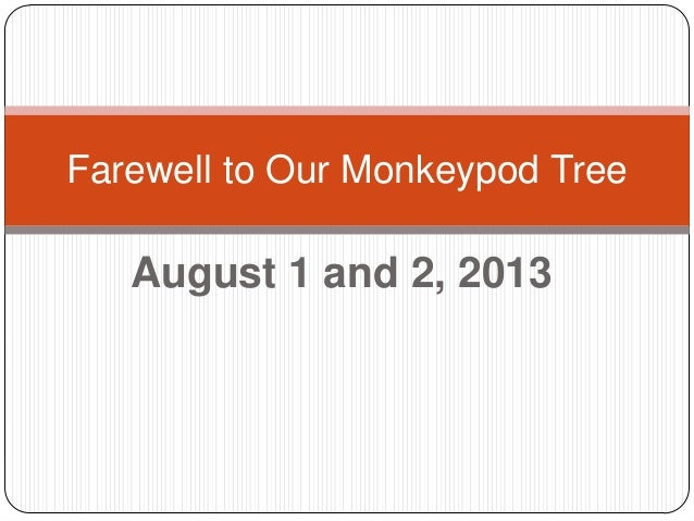 August 1 and 2, 2013 Farewell to Our Monkeypod Tree