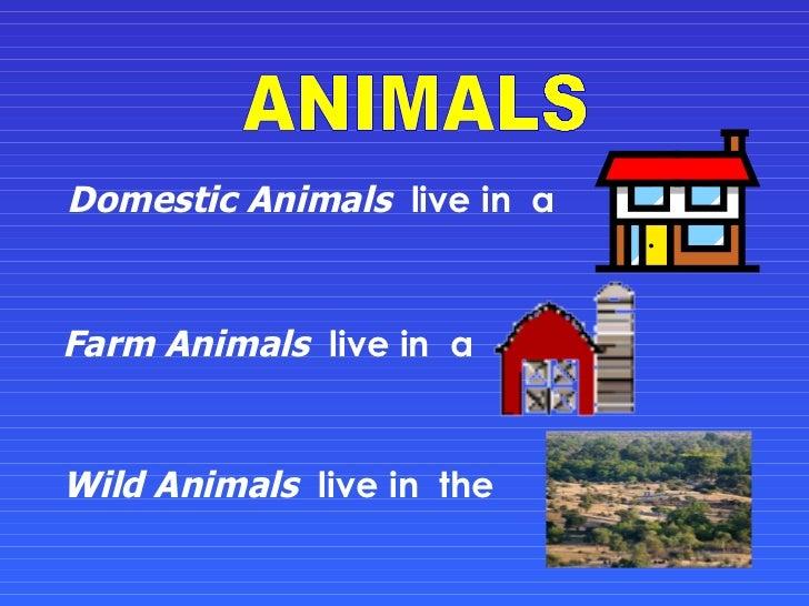 Domestic Animals   live in  a  Farm Animals   live in  a  Wild Animals   live in  the  ANIMALS
