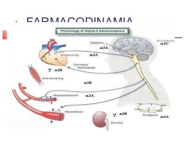 farmacos esteroides inhalados