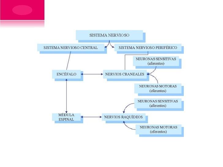 FARMACOLOGÍA DELSISTEMA NERVIOSOCENTRAL