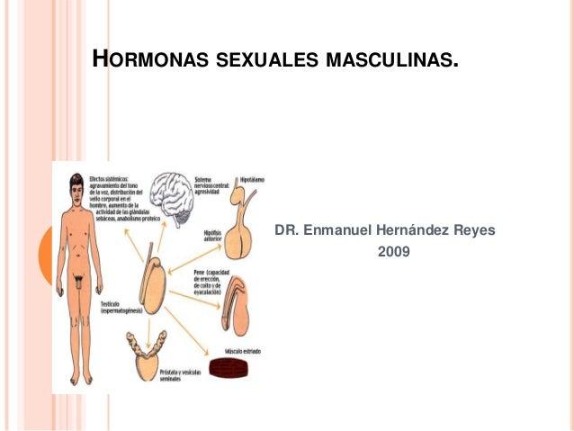 HORMONAS SEXUALES MASCULINAS. DR. Enmanuel Hernández Reyes 2009