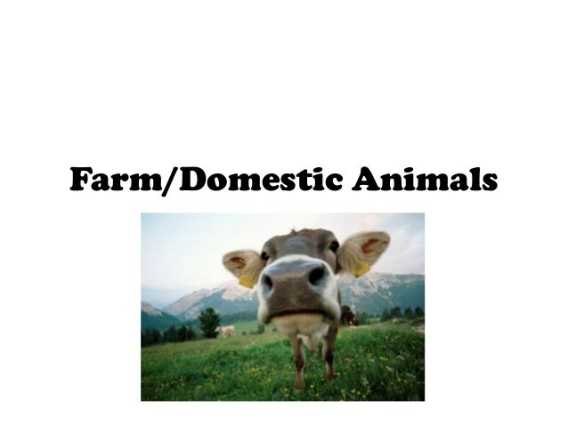 Farm/Domestic Animals