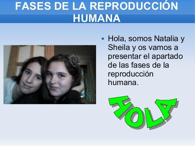 FASES DE LA REPRODUCCIÓN         HUMANA               Hola, somos Natalia y                Sheila y os vamos a           ...