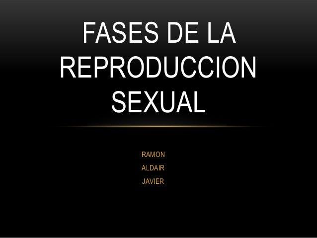 Fases de la reproduccion sexual