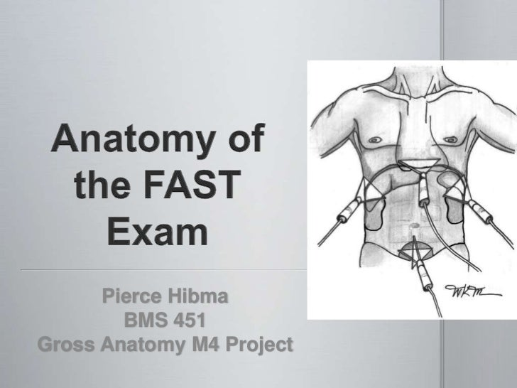 Pierce Hibma Anatomy Project