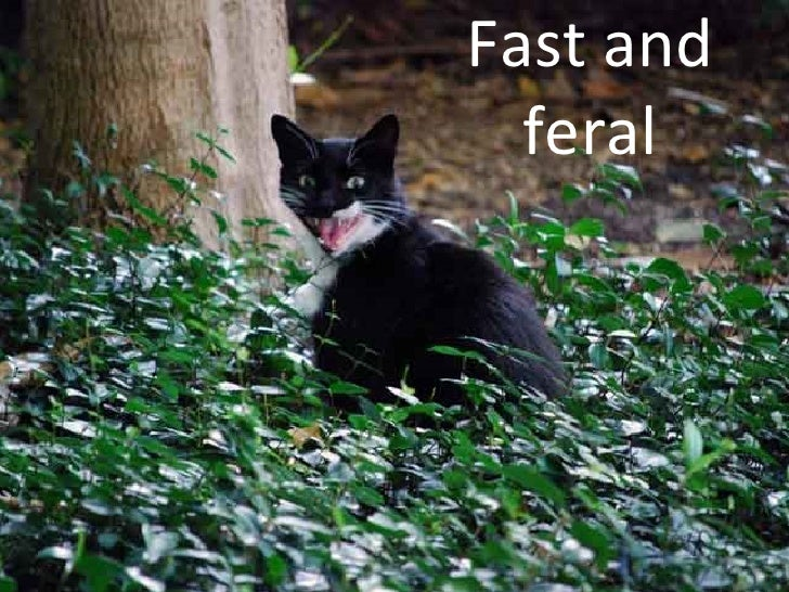Fast   and feral
