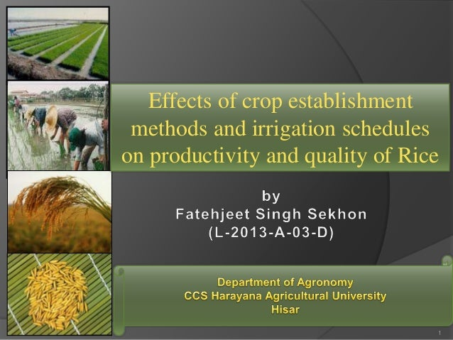 Effects of crop establishment methods and irrigation schedules on productivity and quality of Rice 1
