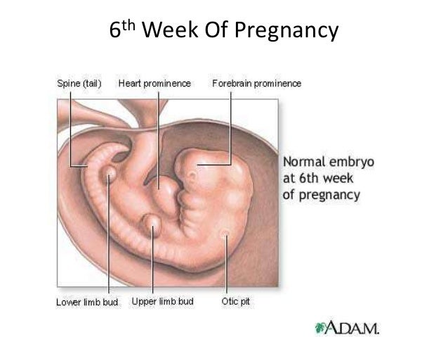 how to take care in first month of pregnancy