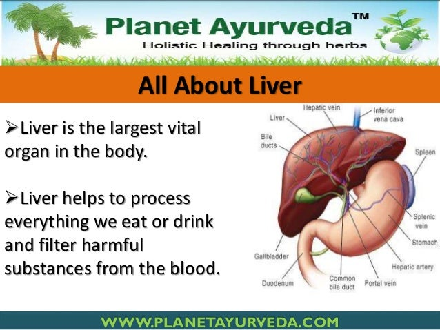 All About Liver Liver is the largest vital organ in the body. Liver helps to process everything we eat or drink and filt...