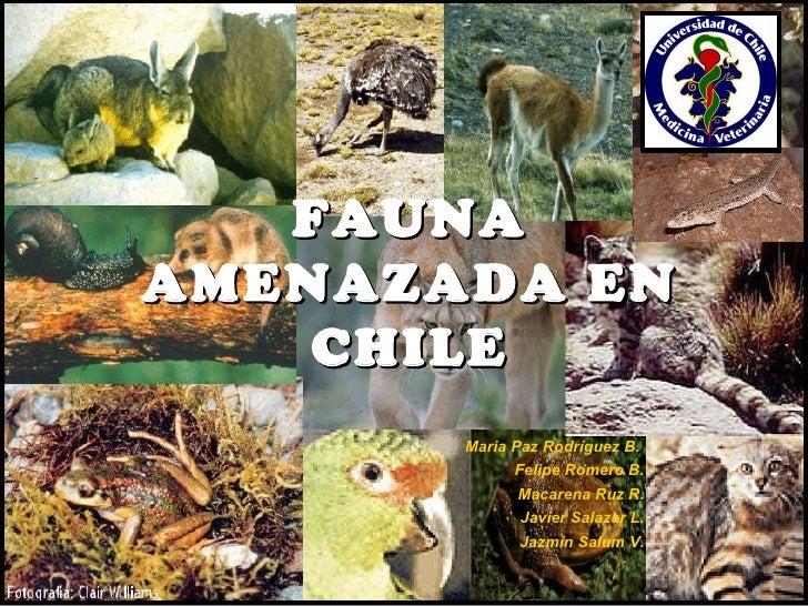 FAUNAAMENAZADA EN    CHILE       Maria Paz Rodríguez B.             Felipe Romero B.             Macarena Ruz R.          ...