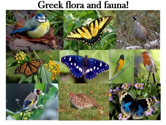 Fauna and flora of greece