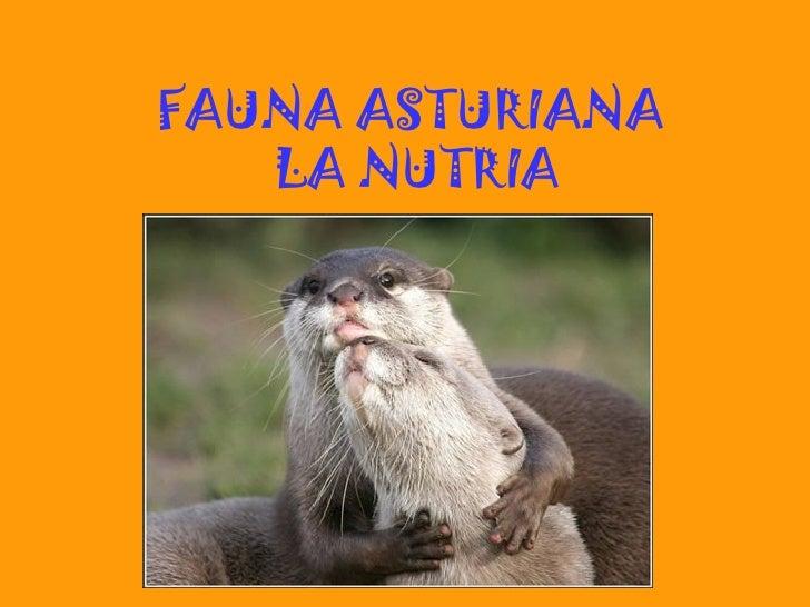 FAUNA ASTURIANA   LA NUTRIA