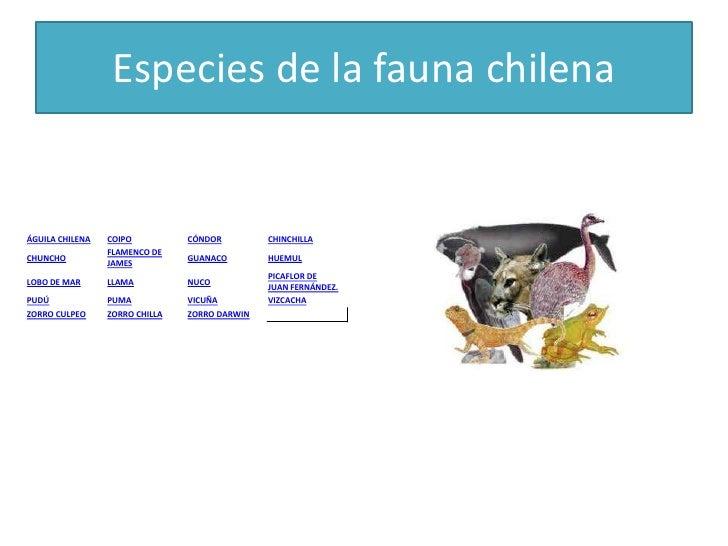 Especies de la fauna chilenaÁGUILA CHILENA   COIPO          CÓNDOR         CHINCHILLA                 FLAMENCO DECHUNCHO  ...