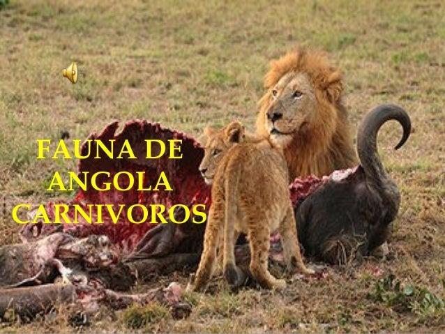 FAUNA DE ANGOLA CARNIVOROS