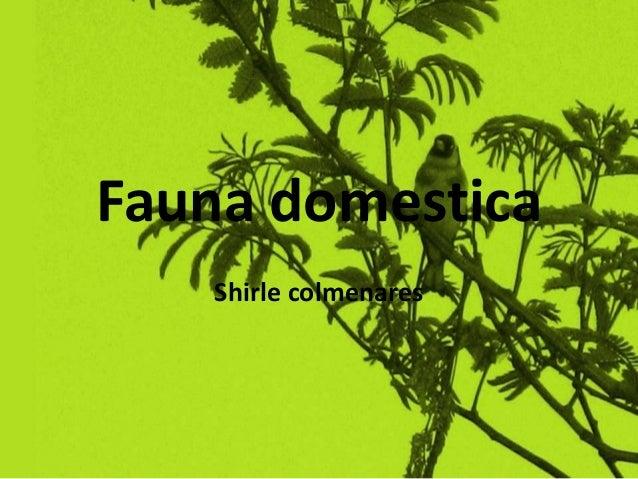 Fauna domestica