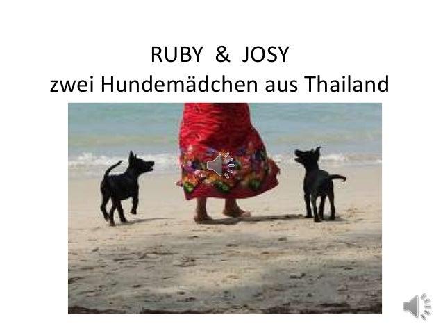 RUBY & JOSYzwei Hundemädchen aus Thailand